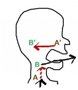 声帯ワープ図